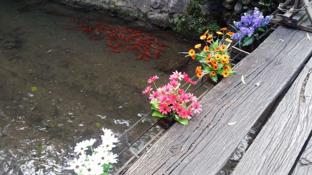 Canal con flores Lijiang