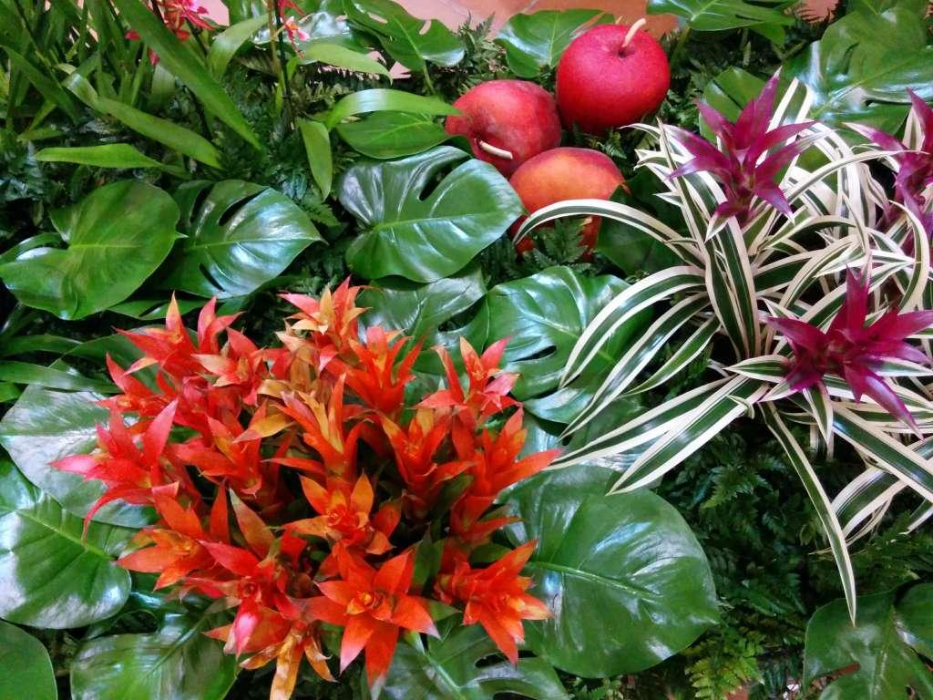 Naranja, garnate